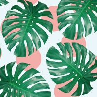 Monstera - DeinDesign